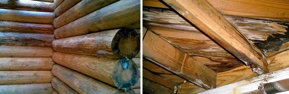 Средство от плесени на дереве в доме