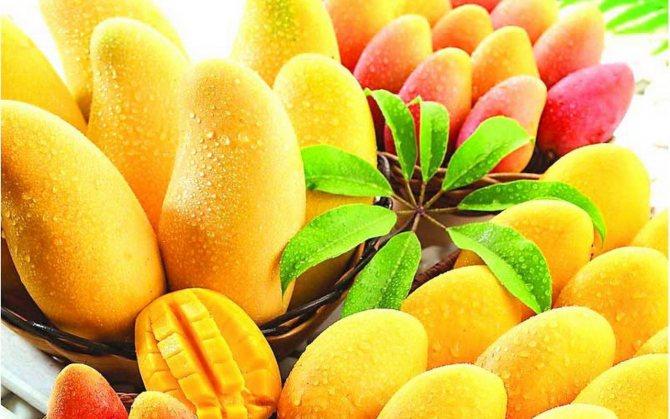 Можно ли хранить манго в холодильнике