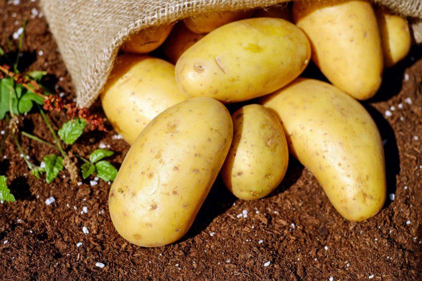 Картофель: описание лучших сортов