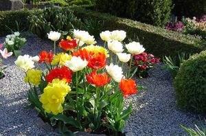 Какие цветы посадить на кладбище под зиму