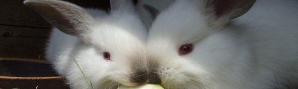 Как сделать крольчатник своими руками