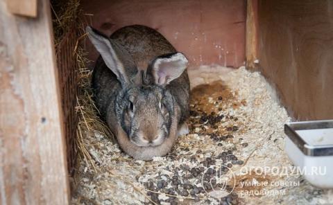 Индивидуальное помещение для кролика-великана