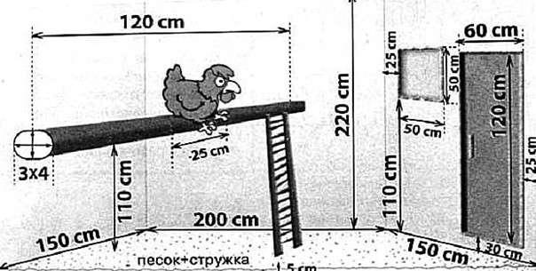 Размеры птичника в курятнике на 10-20 кур